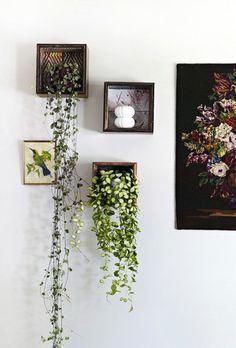 decorazione-mensole-piante-9