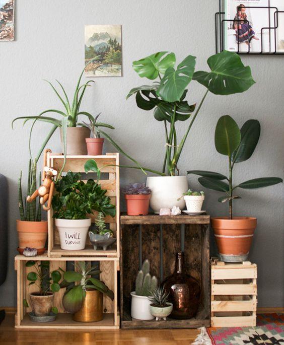 Décorer son intérieur avec des plantes vertes idée n 1