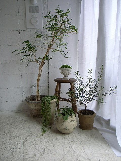 angolo-piante-casa-13