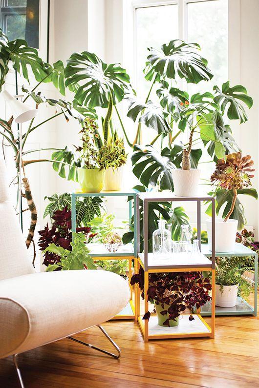 Un coin plantes vertes