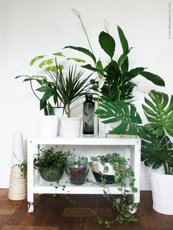 Un coin plantes vertes dans votre int rieur voici 20 id es - Decorer terras avec plantes ...