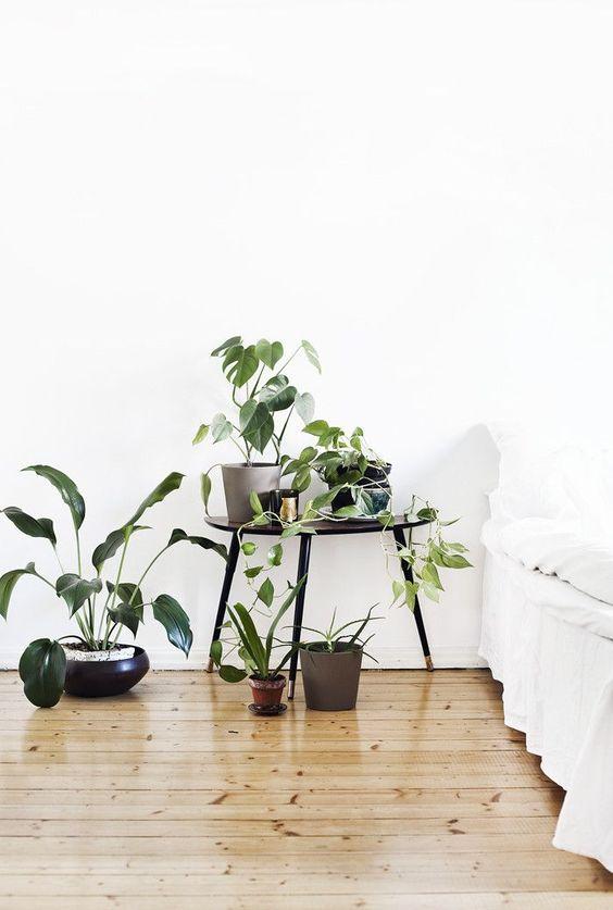 angolo-piante-casa-20
