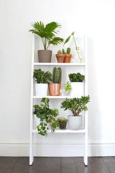 Un coin plantes vertes dans votre int rieur voici 20 id es for Meuble plante
