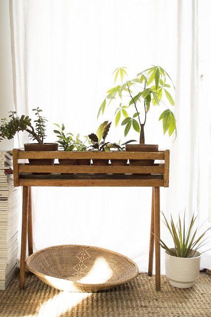 angolo-piante-casa-4