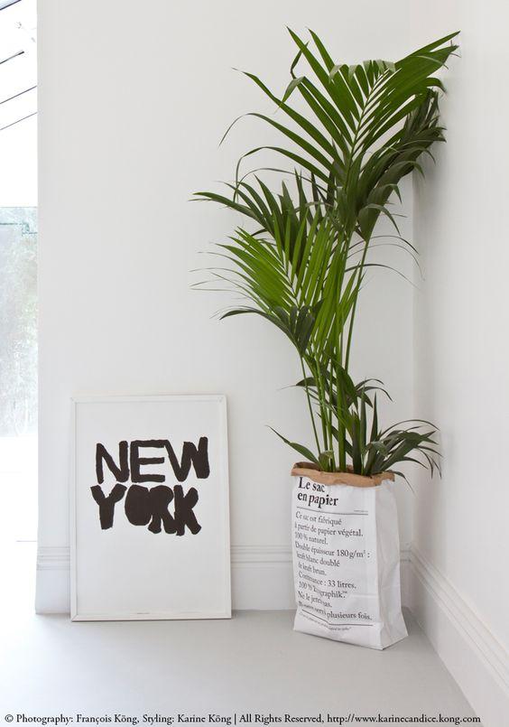 angolo-piante-casa-9