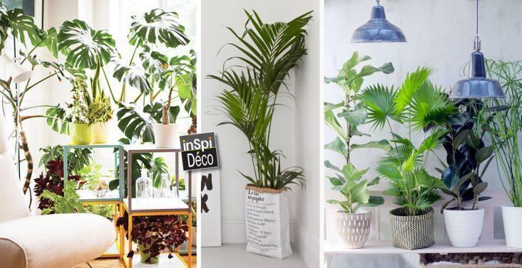decoration-plantes-vertes