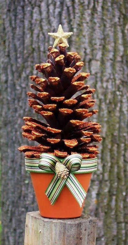 Un petit arbuste avec des pommes de pin