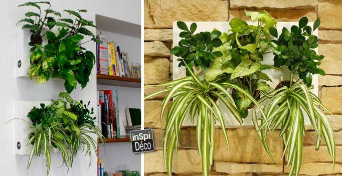 deco-cadre-vegetal