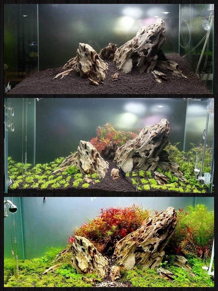 decorazioni acquario originali 12