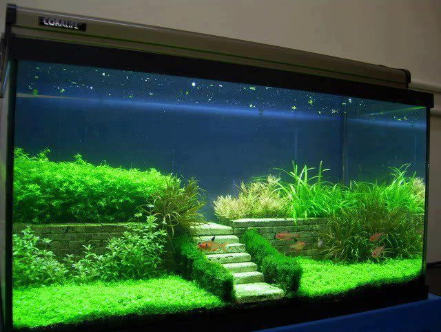 Decoration For Your Aquarium