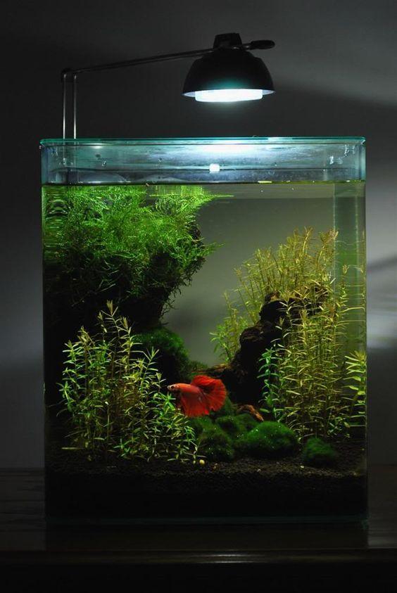 decorazioni-creative-piccolo-acquario-14