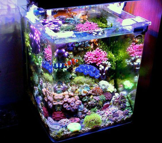 decorazioni-creative-piccolo-acquario-18
