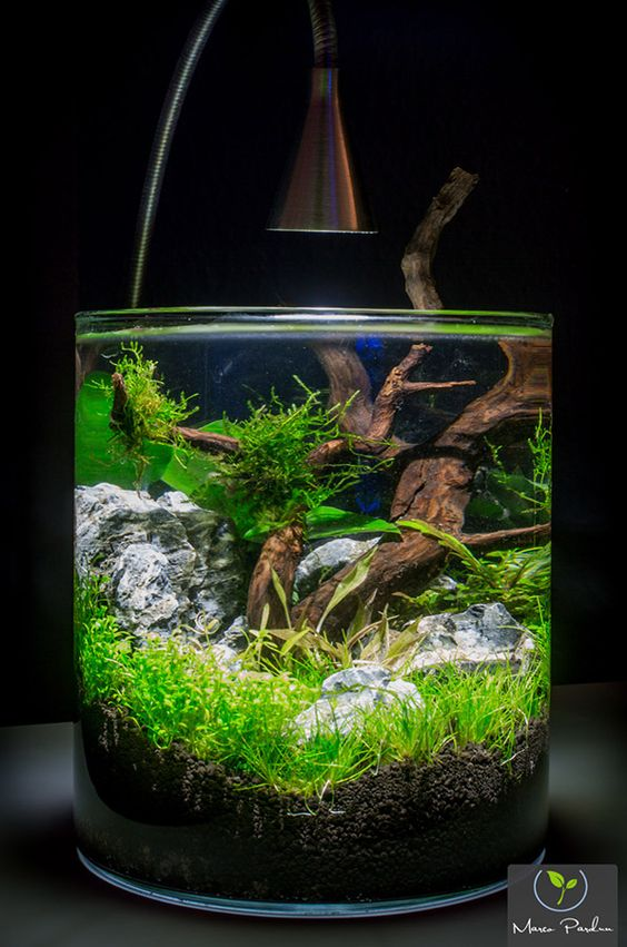 exemple id e d co aquarium zen idee deco aquarium. Black Bedroom Furniture Sets. Home Design Ideas