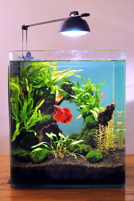 decorazioni-creative-piccolo-acquario-8