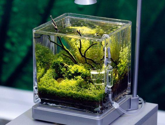 decorazioni-creative-piccolo-acquario-9