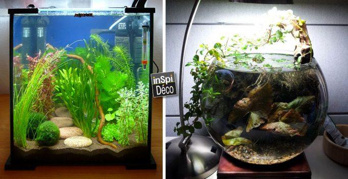 decorer-un-petit-aquarium