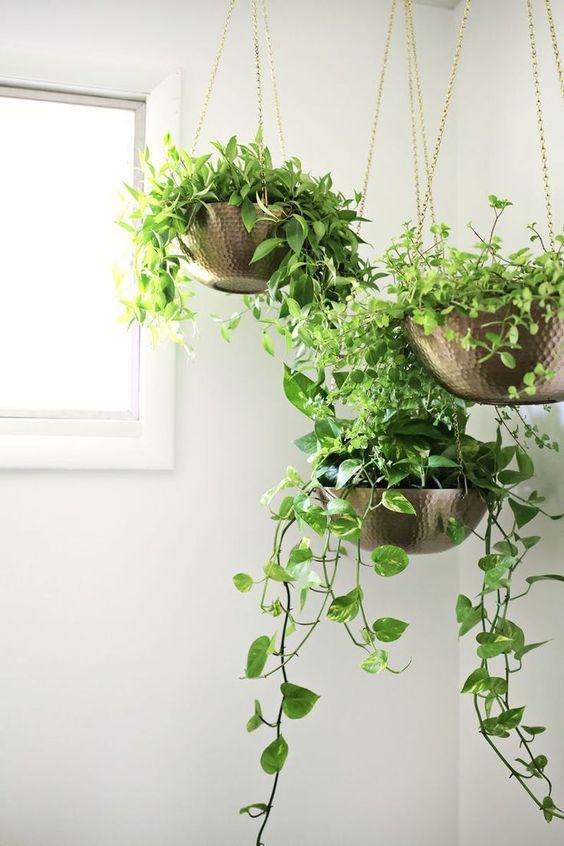 decorazioni originale piante 16