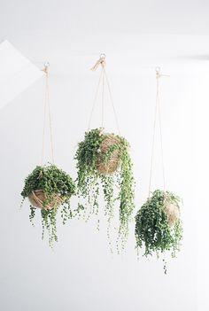 decorazioni originale piante 2