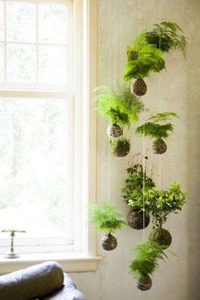 decorazioni originale piante 6
