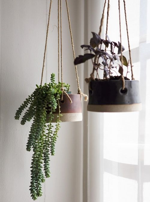 decorazioni originale piante 9