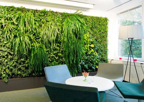 parete vegetale fai da te 4