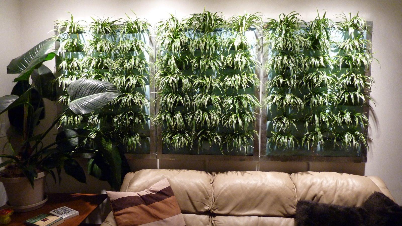 parete vegetale fai da te 9