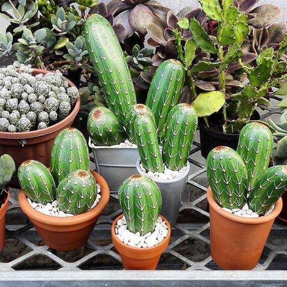 sassi cactus 4