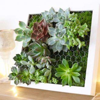 tutoriel-cadre-vegetal