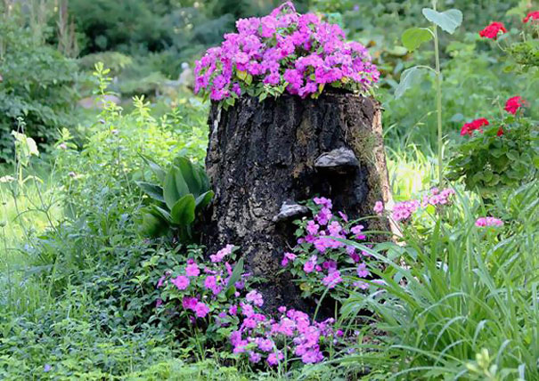 Transformer le tronc d 39 un arbre abattu en un pot de fleurs for S occuper d un citronnier en pot