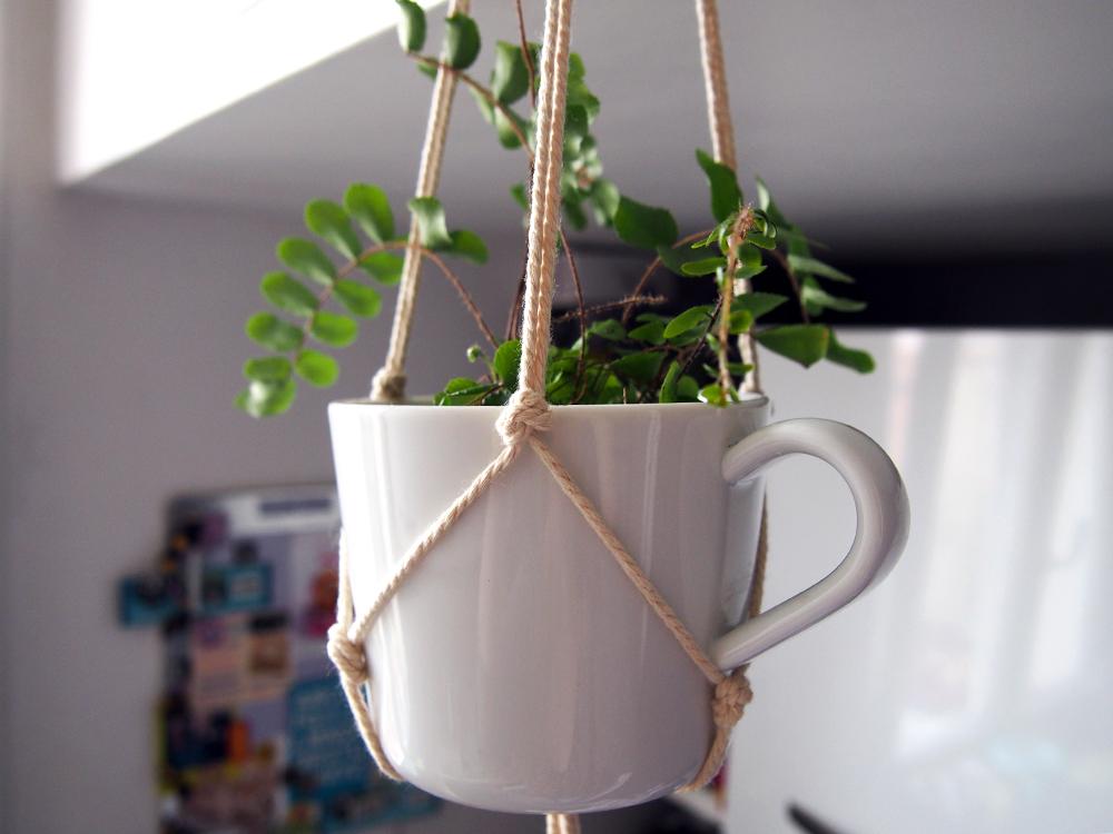 Des plantes suspendues