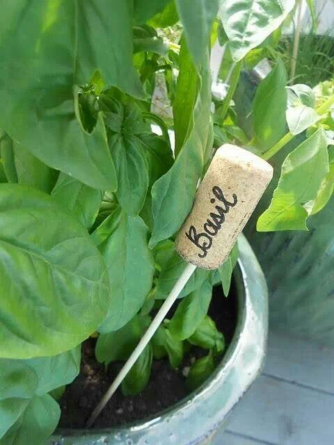 étiqueter les plantes de votre jardin