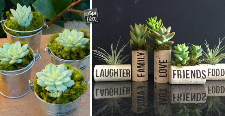 petit-pot-original-avec-succulentes