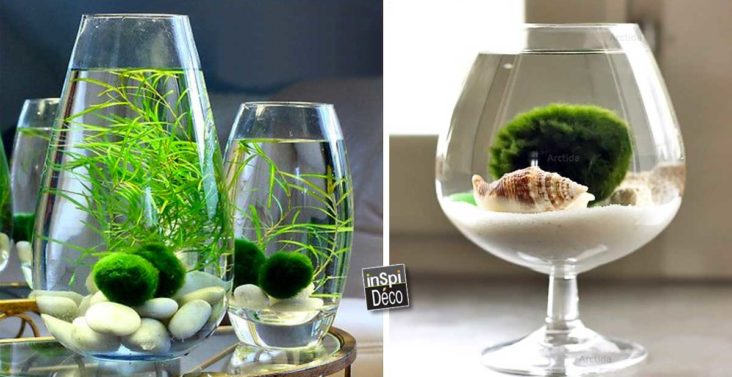 realiser-un-vase-a-deco-aquatique