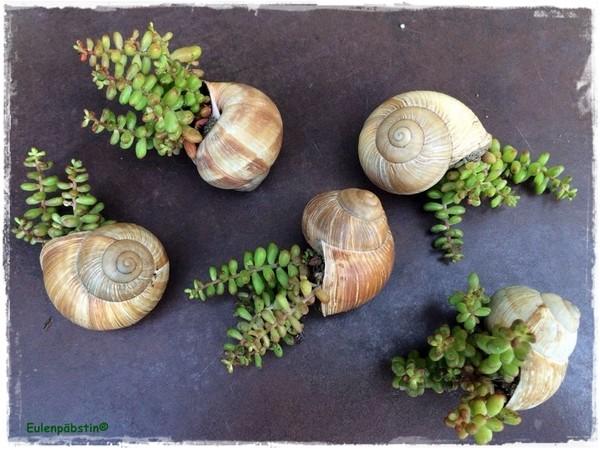 Vasetti creativi con le piante grasse