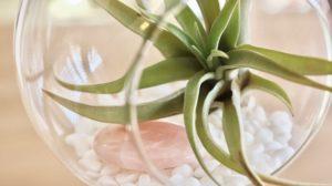 Décorer son intérieur avec des plantes suspendues