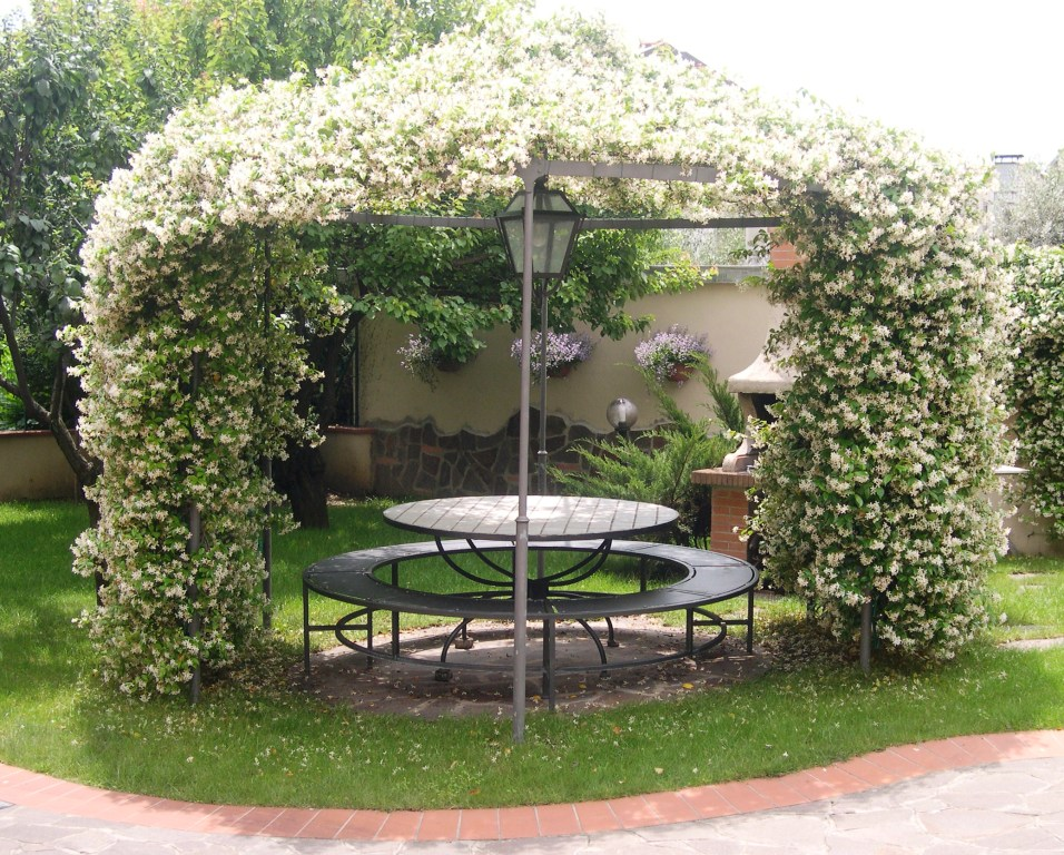 une pergola avec des plantes grimpantes 10 plantes adapt es 20 id es. Black Bedroom Furniture Sets. Home Design Ideas