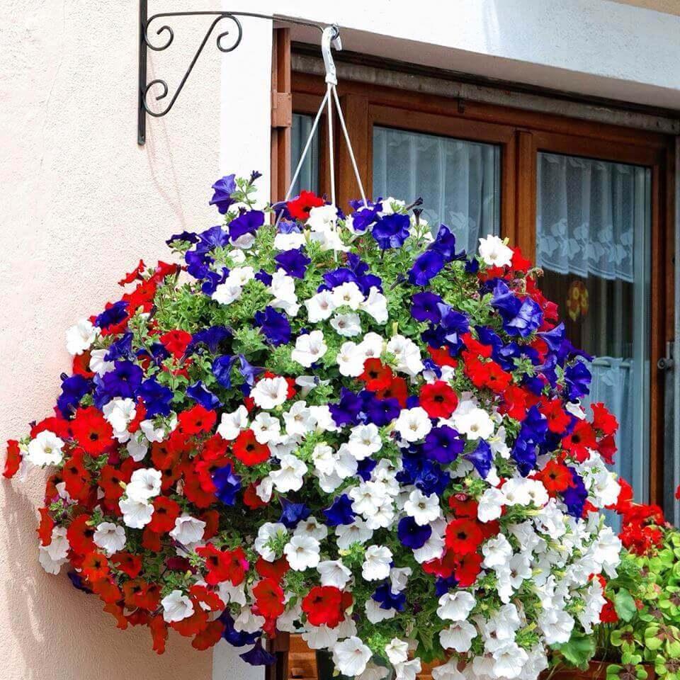 Plantes suspendues pour d corer le jardin voici 20 id es for Plante pour jardin