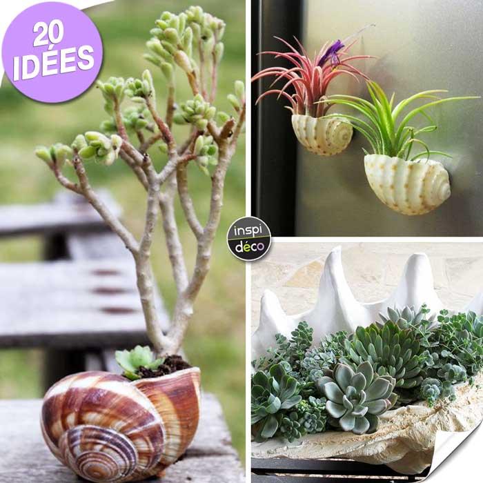 Jardinière créative avec coquillage