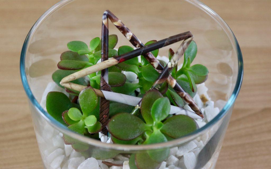 Comment créer une décoration de succulentes