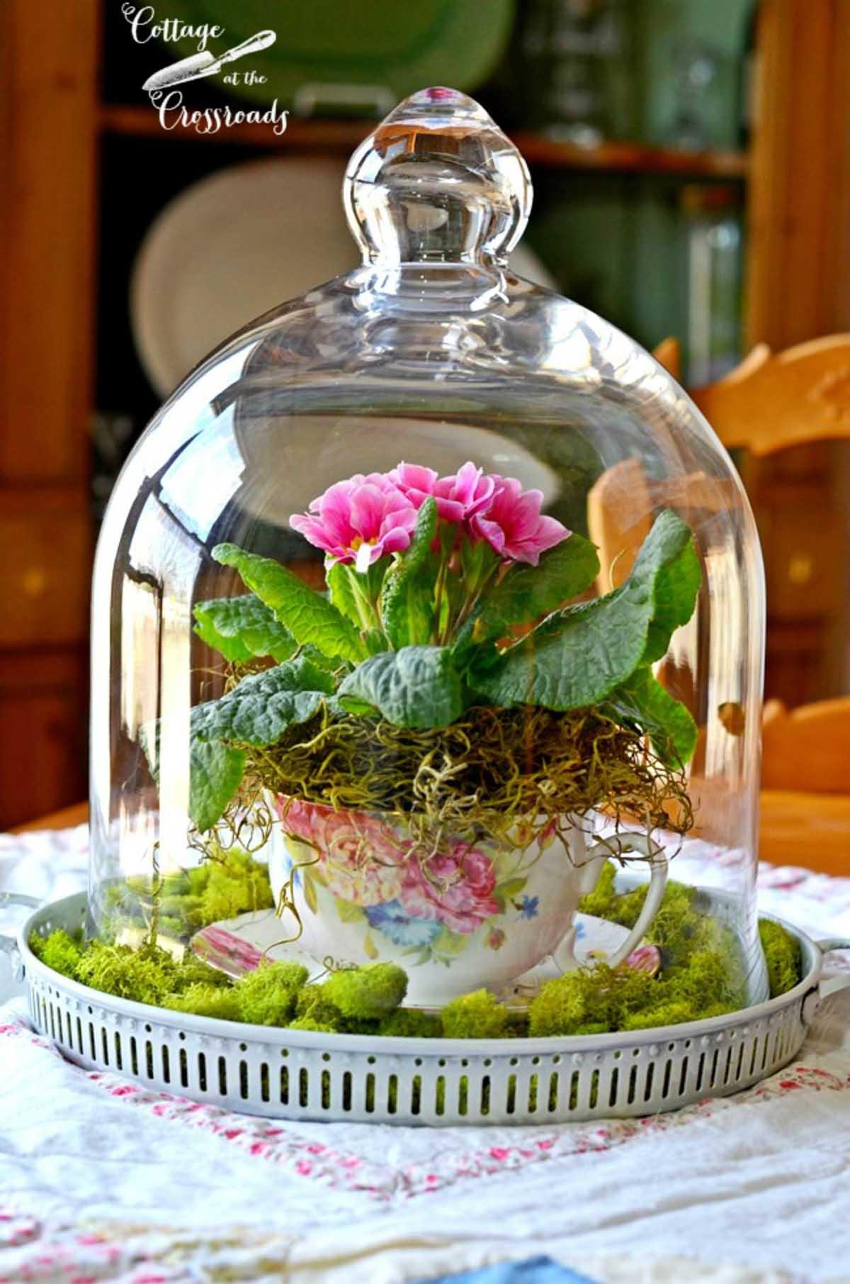 Réaliser un mini jardin dans une tasse
