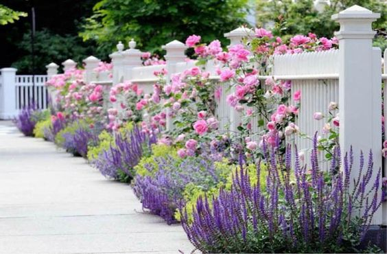 jardin style provençal