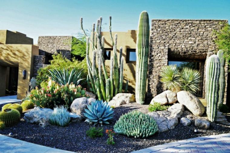 Décorer son jardin avec Cactus e Succulentes