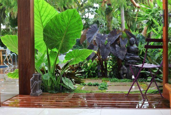 Décorer son jardin avec des plantes exotiques