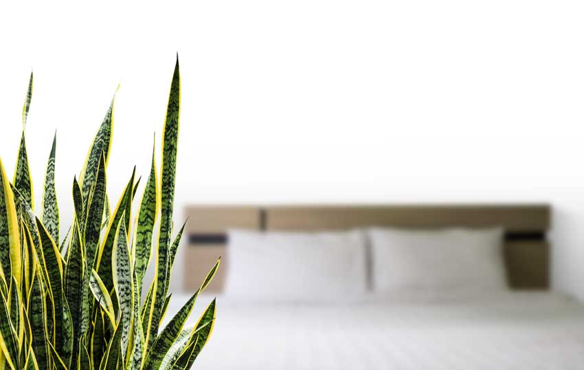 Mieux dormir avec les plantes