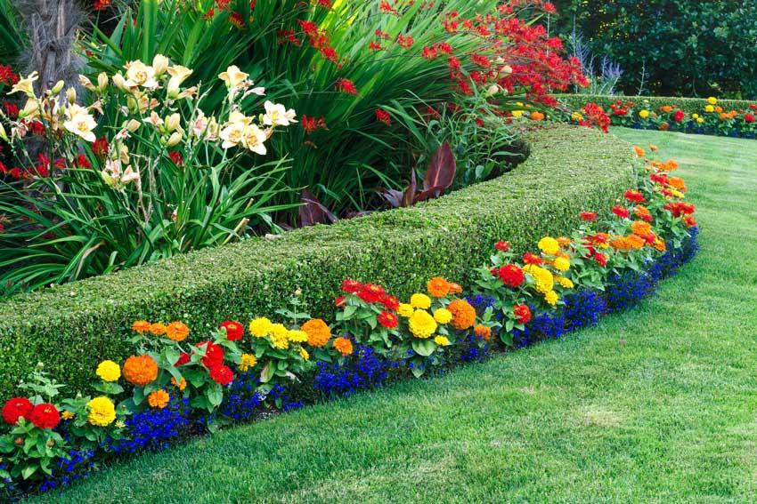 haie de jardin avec Buis.