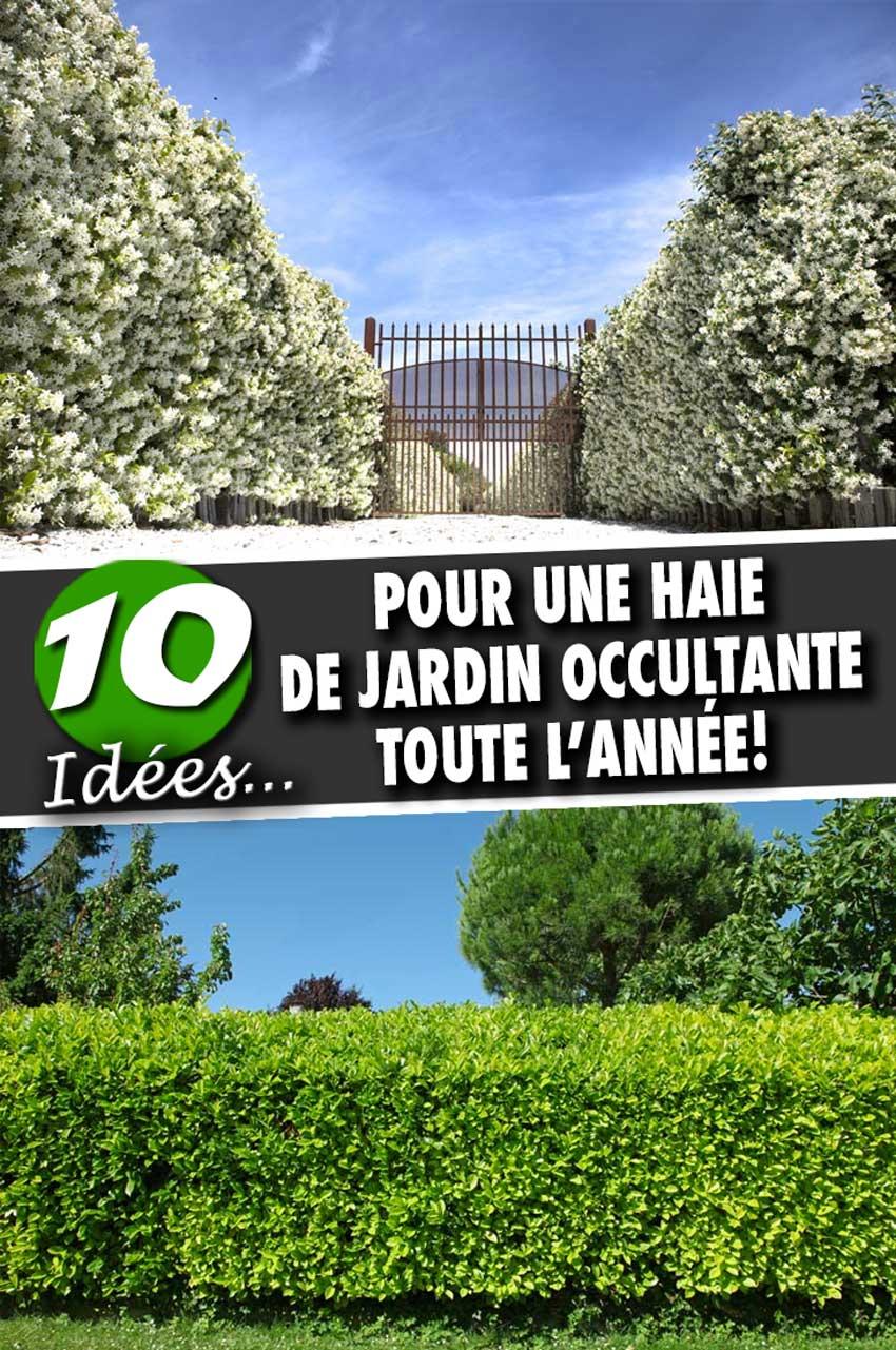 Arbustes pour haie de jardin occultante: En voici 10 au feuillage ...