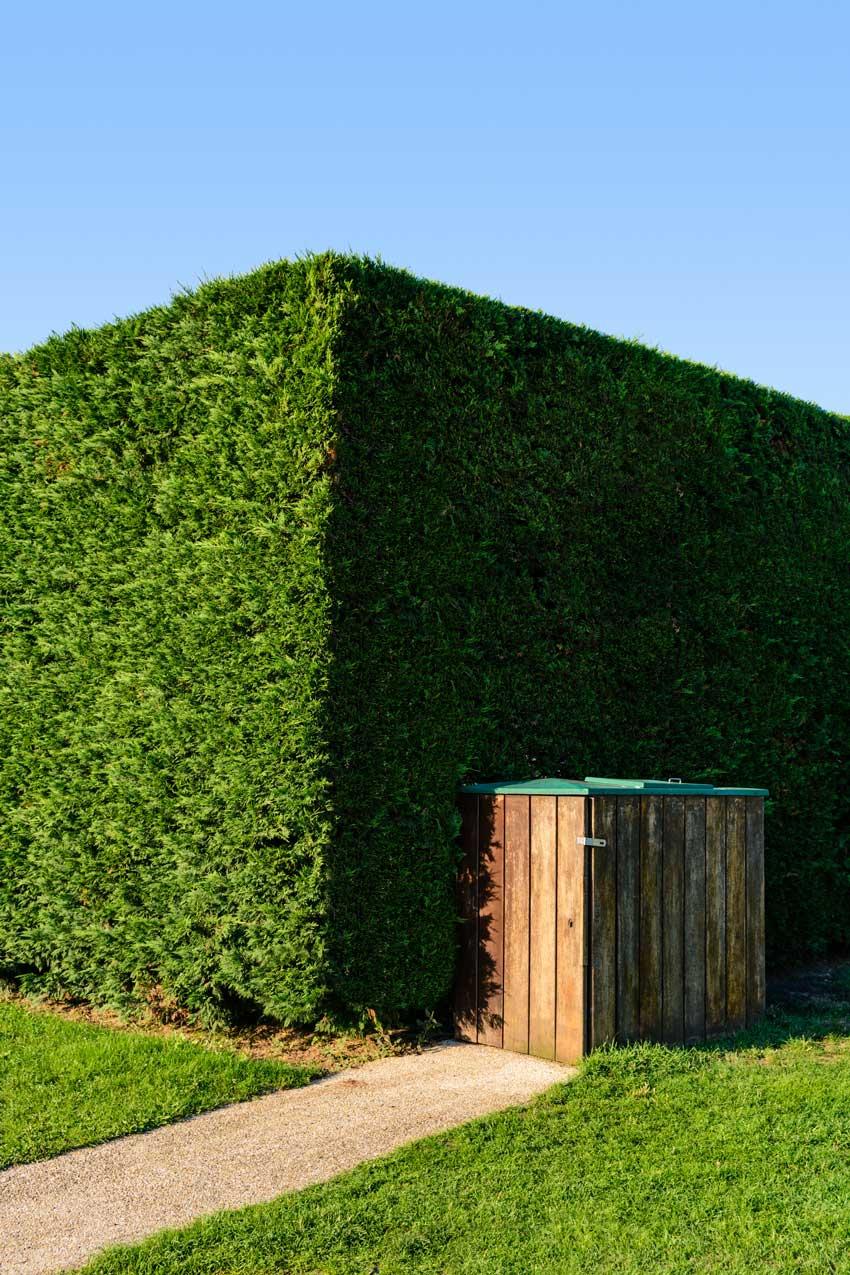 haie de jardin haute et compacte avec cyprès de Leyland.