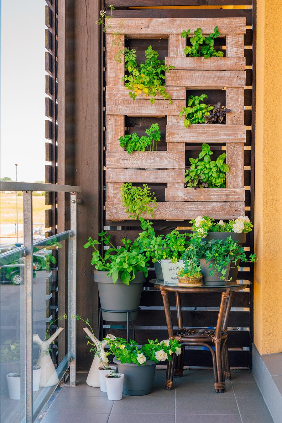 jardin vertical sur le balcon avec plantes aromatiques.