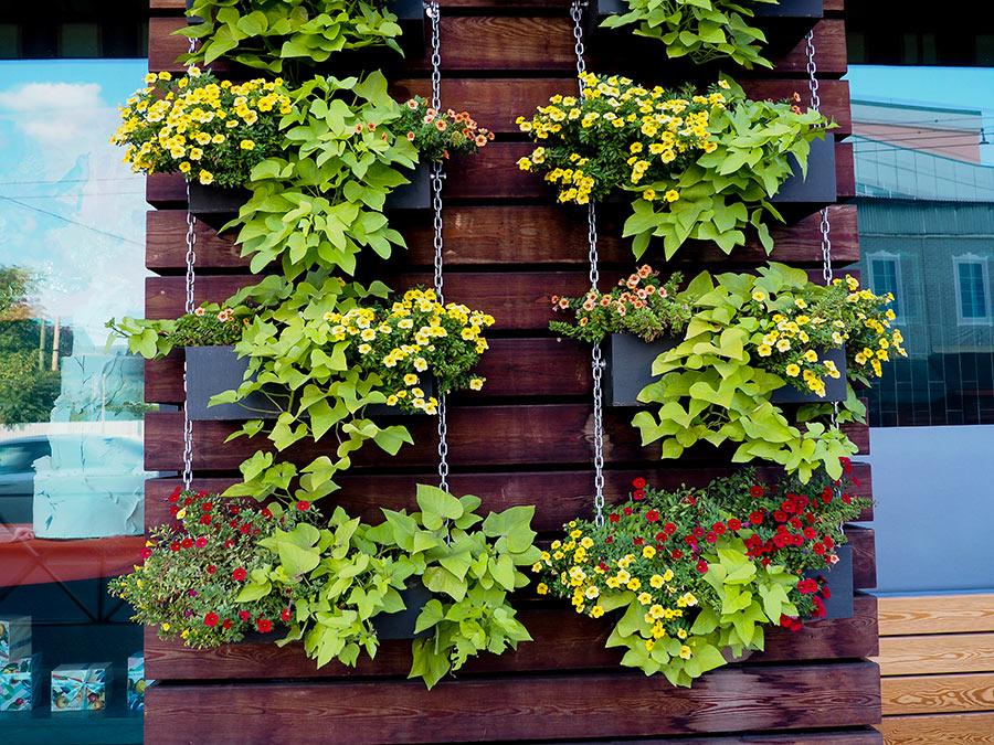 Jardin vertical DIY réalisé avec palette de bois.