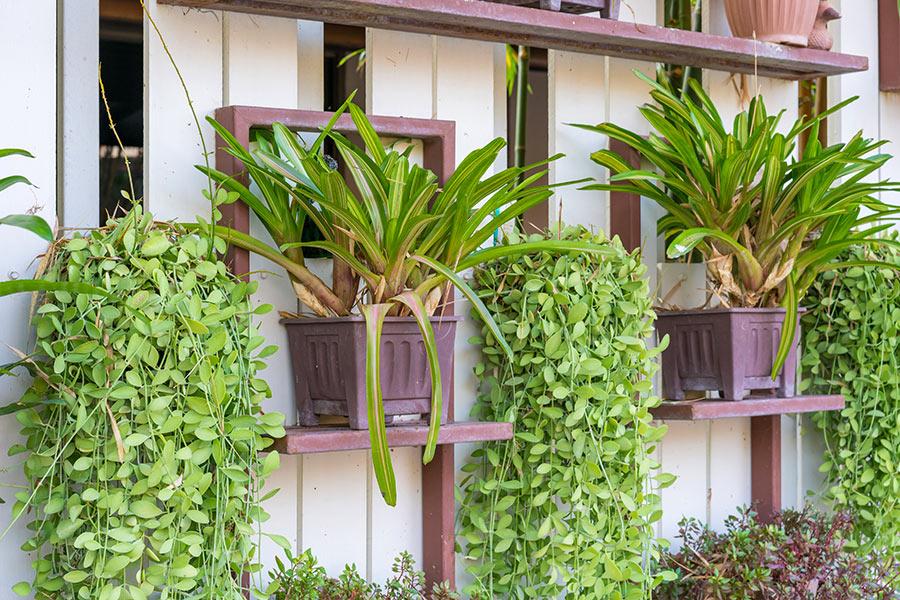 jardin vertical extérieur design.